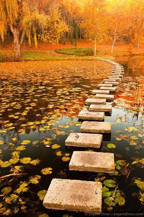 Autumn Pond, Poland
