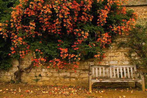 Autumn, Cambridge, England
