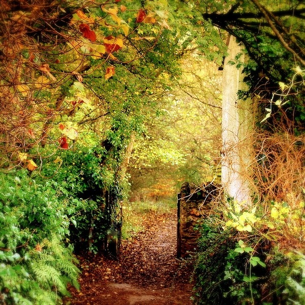 Magical Forest of Dean, Gloucestershire, England