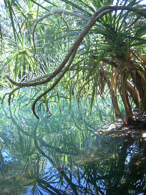 Berry Springs near Darwin, Northern Territory, Australia