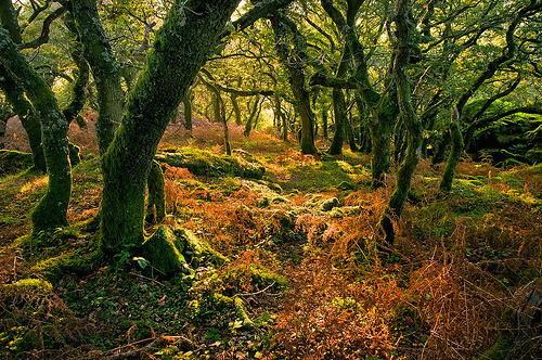 Enchanted Forest, Dartmoor, Devon, England