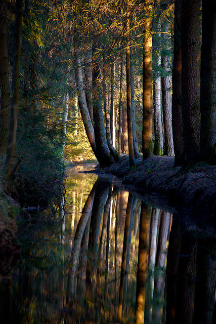 Dark Forest, Nagel, Bavaria, Germany