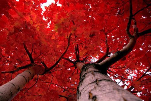 Crimson, Quebec, Canada
