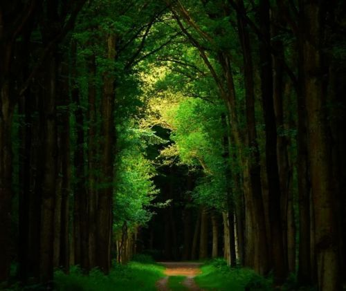 Dark Forest, The Netherlands