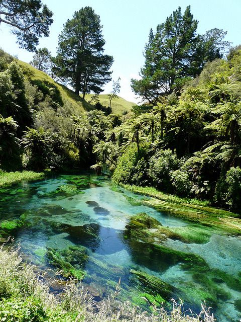 Blue clear waters of Waihou River, New Zealand