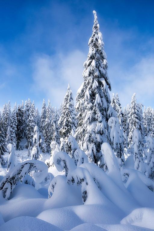 Mt. Seymour Provincial Park, British Columbia