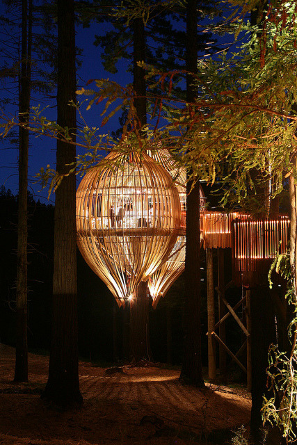 The Yellow Treehouse Restaurant at night near Auckland, New Zealand