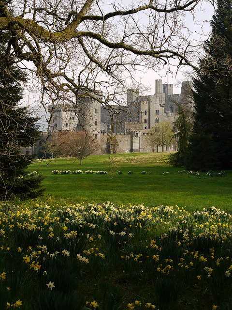 Garden view at Penrhyn Castle / Wales