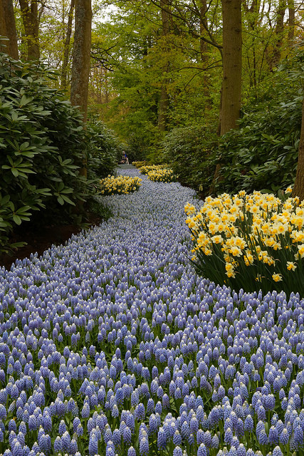The flower path, Keukenhof Gardens / Netherlands