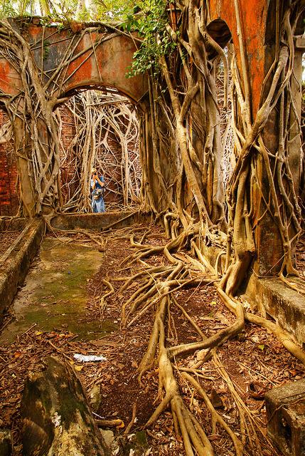 Nature taking control, South Andaman Islands / India